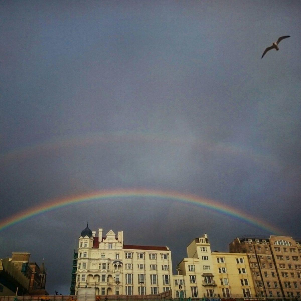 The Bird Flying Over The Rainbow