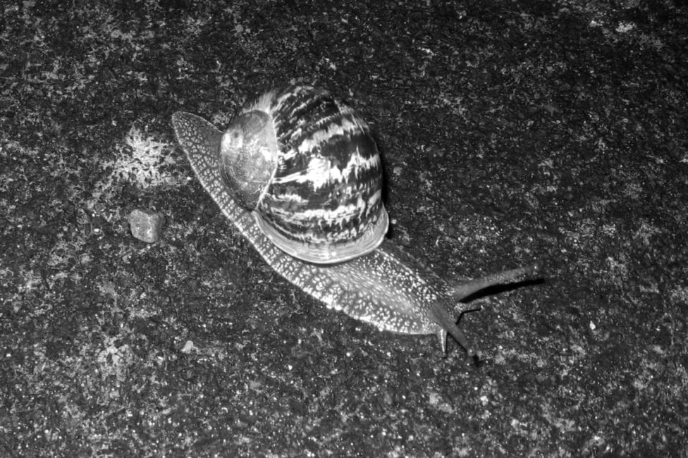 Ck Snail