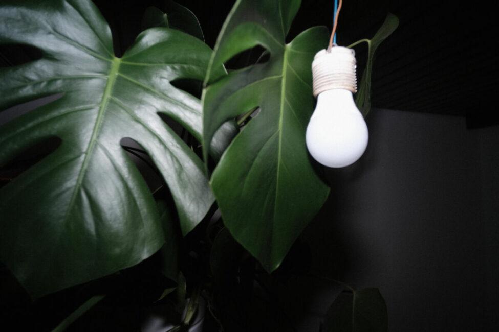 Hmv Bulb